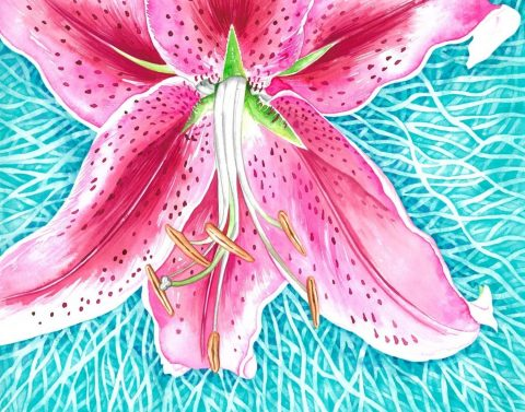 Lily in Aqua