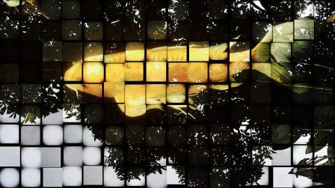 Mosaic Koi (Framed)