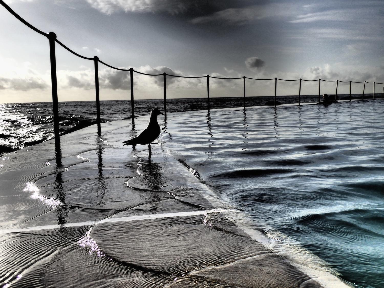 Seagull (Framed)