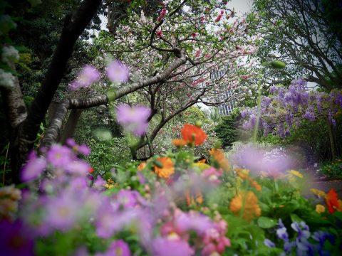 Purple - Botanical Gardens (Framed)
