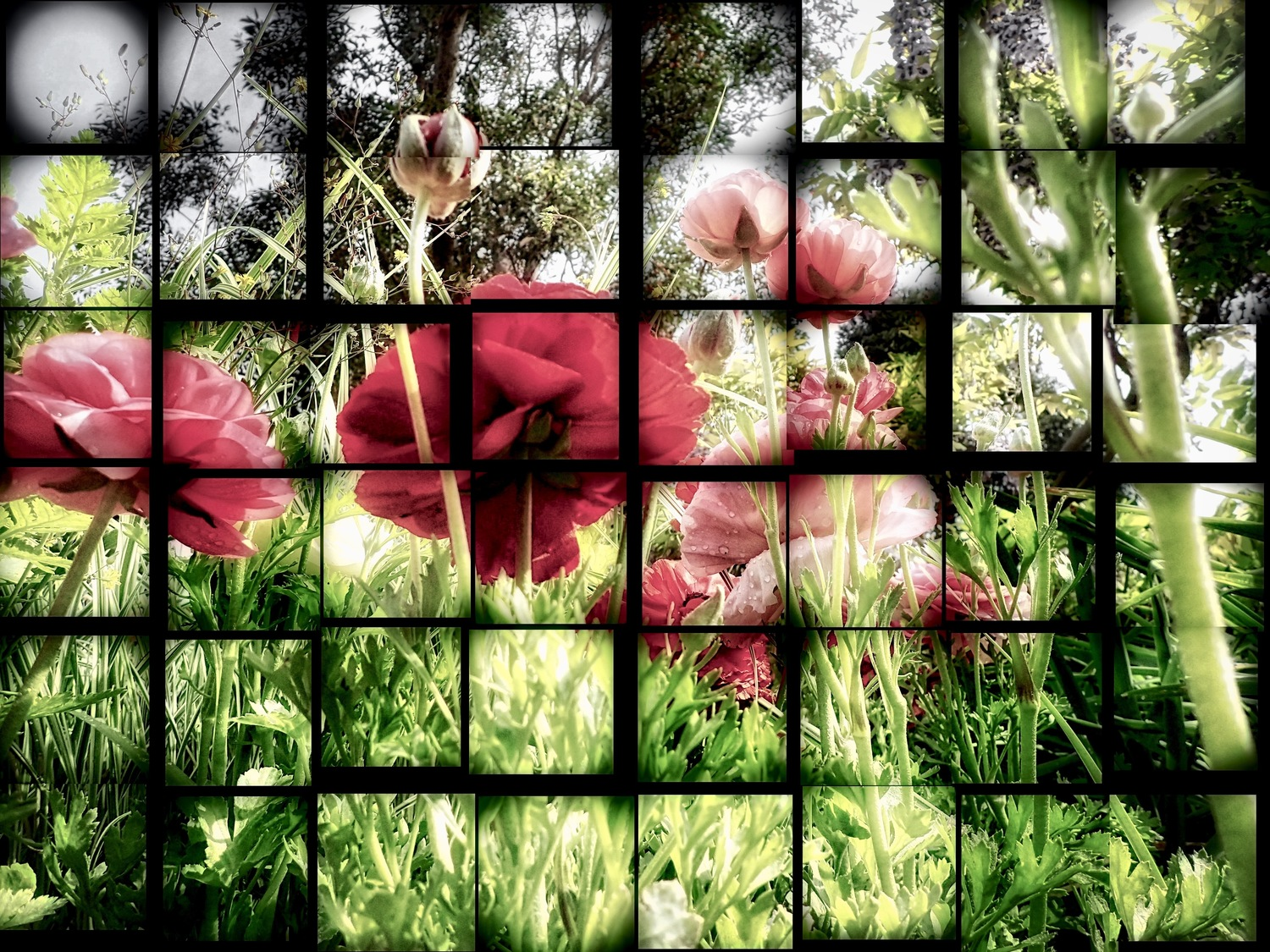Poppies Mosaic (Framed)