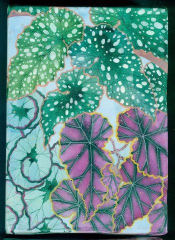 """Little garden # 2 """" Begonias"""