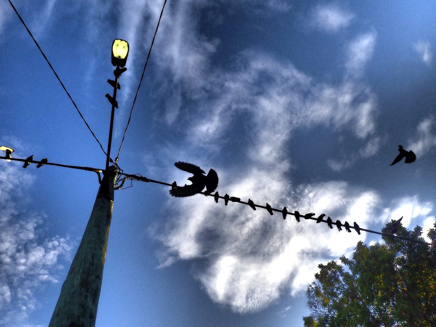 Bird on a wire #1 (Print only)