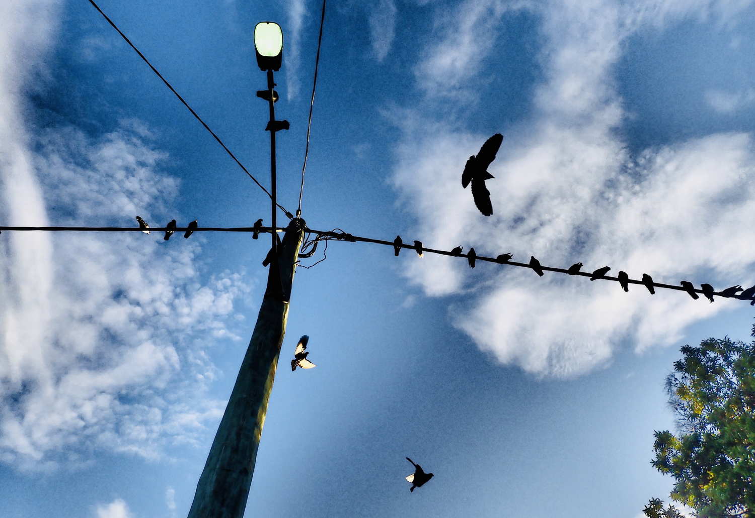 Bird on a wire #2 (Print only)